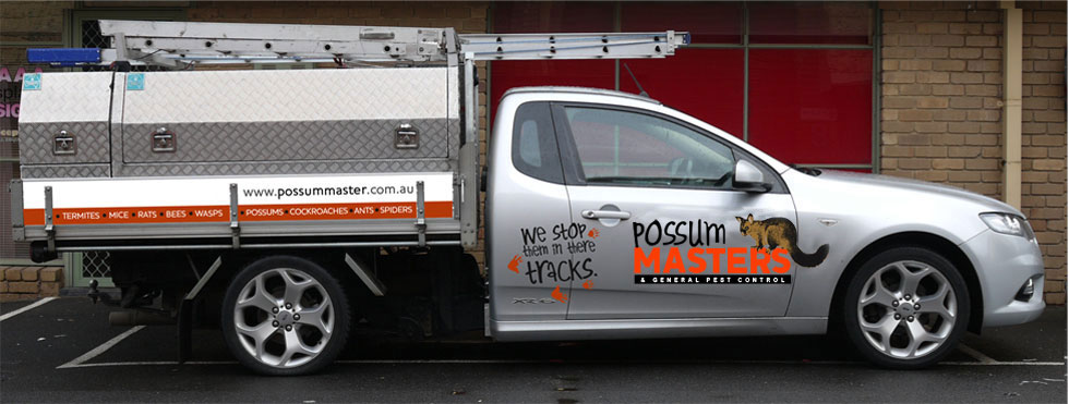 Possum Removal Melbourne Getting Rid Of Possums Pest